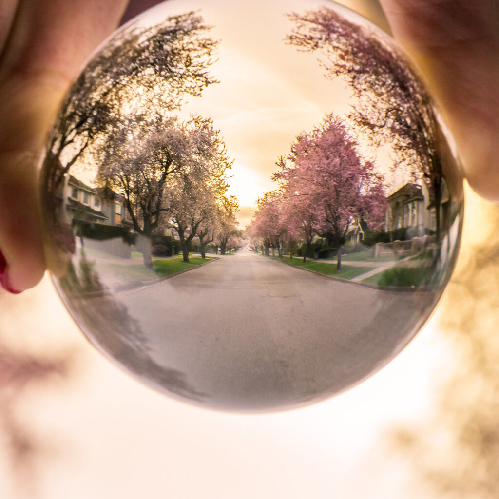 a close up image of a soap bubble reflecting a suburban street lined with trees and houses